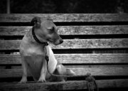 dog tied up for bench