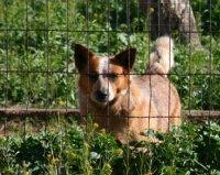 dog behinde fence