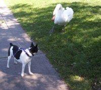 dog and the bird