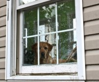 dog locked in the house