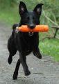 puppy retrieve