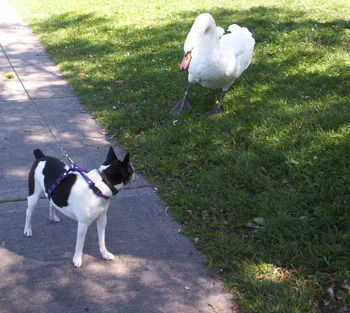 dog and the bird