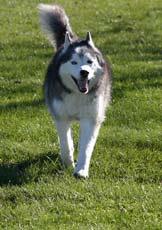 dog come command