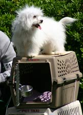 dog on the crate